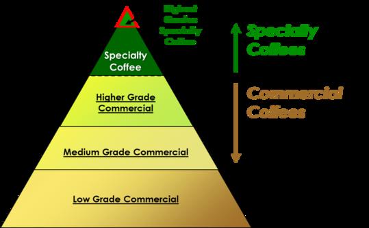 Moon Roast Coffee Infographic